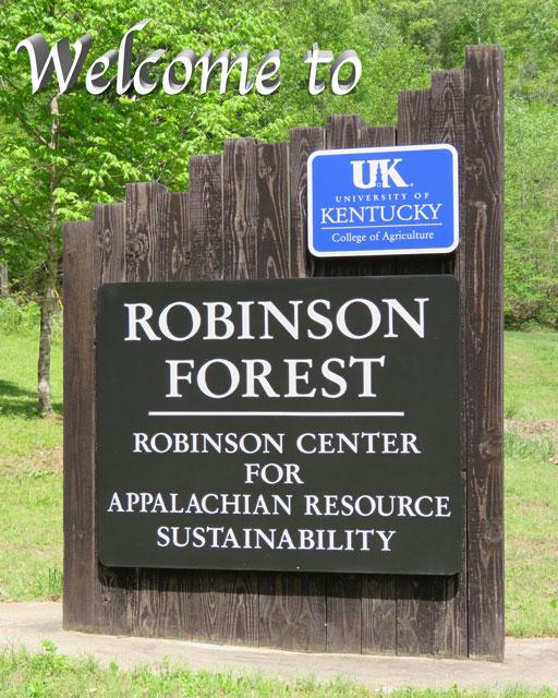 Welcome to Robinson Forest